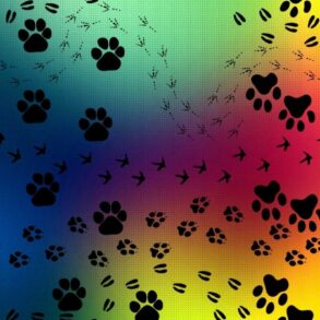 paws of different species in colofurl background